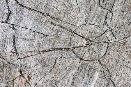 close up of grey aged stump with cracks