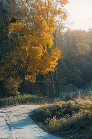 Photo for Beautiful orange leaves on trees and road in autumn - Royalty Free Image