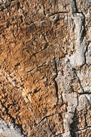 Photo for Close up view of old brown tree bark background - Royalty Free Image