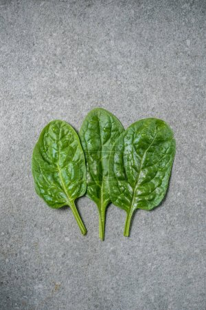Photo for Row of wet and fresh spinach leaves on grey background - Royalty Free Image
