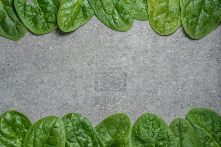 Frame of green and wet spinach leaves on grey background