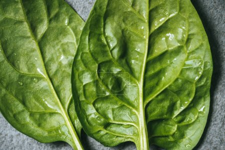 Close up of fresh and green spinach leaves