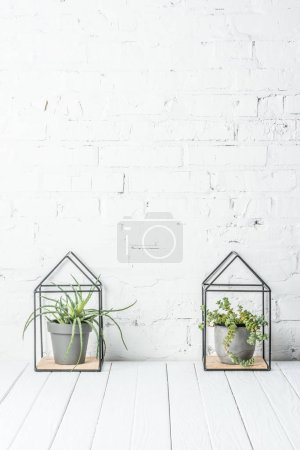 Photo for Green plants in pots on white wooden table near brick wall - Royalty Free Image