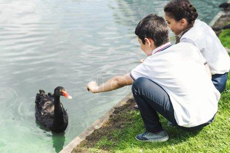 Photo pour Preteen écoliers alimentation swan à l'étang du parc - image libre de droit