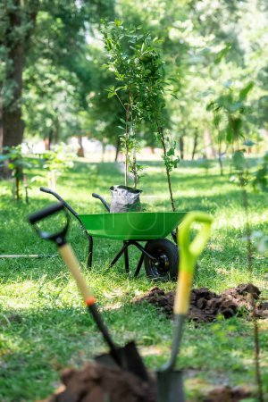 selective focus of shovels in ground for planting trees in park
