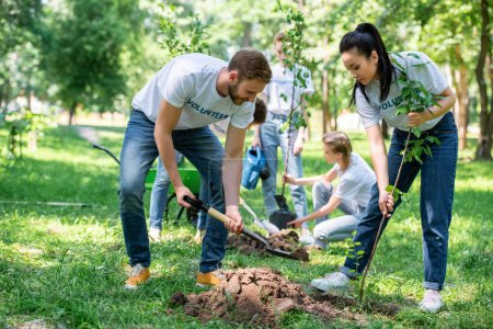 volunteers planting trees in green park together