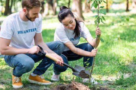 Photo pour Couple de bénévoles plantant un nouvel arbre avec une pelle - image libre de droit
