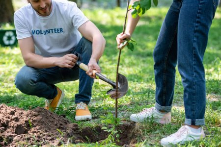 cropped view of two volunteers planting new tree with shovel
