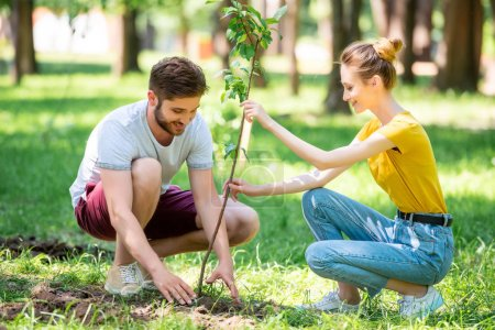 young couple planting new tree in park
