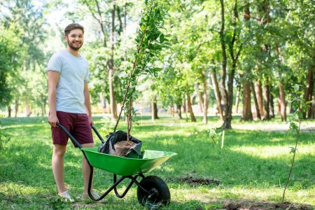 young man with new trees in wheelbarrow standing in park