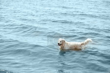 high angle view of golden retriever standing in sea