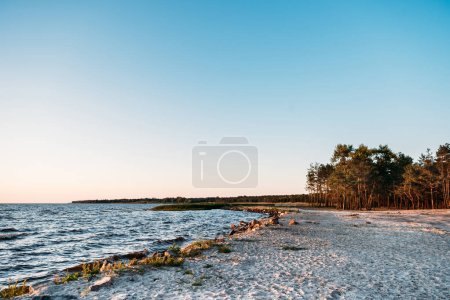 beautiful landscape with forest on sandy sea coast at evening
