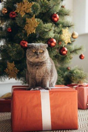 grey scottish fold cat sitting on gift box near christmas tree
