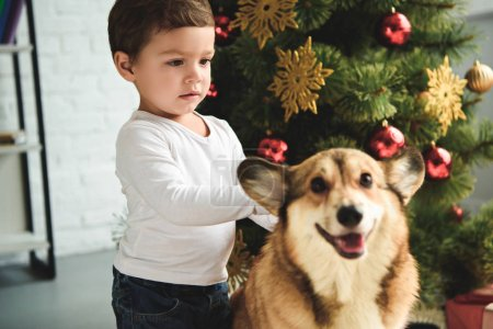adorable boy petting welsh corgi dog near christmas tree