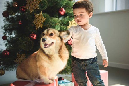 little cute boy petting welsh corgi dog near christmas tree