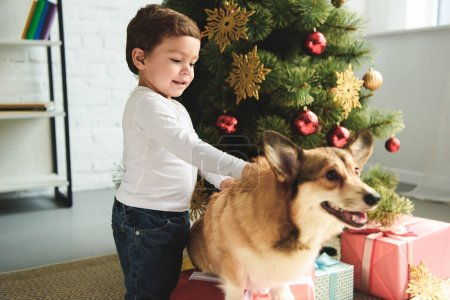toddler petting welsh corgi dog near christmas tree