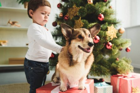 Photo for Adorable toddler petting welsh corgi dog near christmas tree - Royalty Free Image
