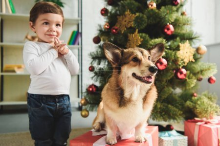 adorable happy boy and welsh corgi dog near christmas tree