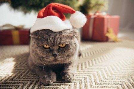 Photo pour Gris chat scottish fold en bonnet couché sous l'arbre de Noël - image libre de droit