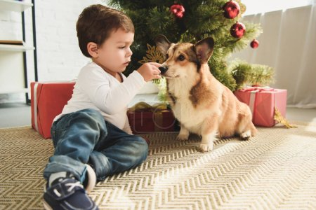 boy playing with dog sitting under christmas tree