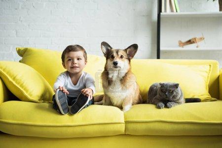 boy sitting on yellow sofa with welsh corgi dog and scottish fold cat