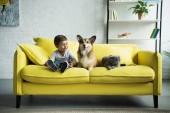 """Постер, картина, фотообои """"прелестный мальчик с собакой Вельш корги и Шотландская вислоухая Кошка сидит на желтый диване у себя дома"""""""