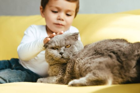 Photo for Adorable boy petting scottish fold cat and on yellow sofa at home - Royalty Free Image