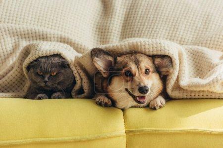 gato y perro acostado debajo de cuadros en el sofá