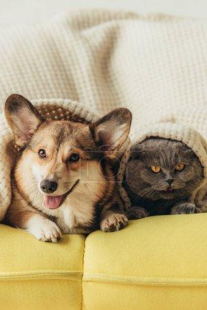 drôles d'animaux couchés ensemble sous plaid sur canapé