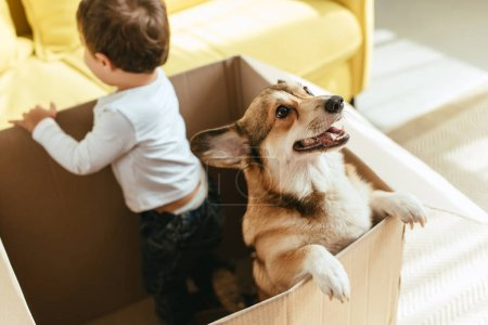 boy playing with welsh corgi dog in cardboard box