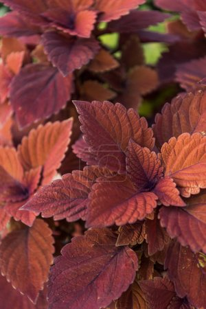 close up of beautiful bright orange and brown leaves at flower shop