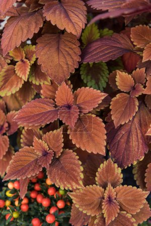 top view of beautiful bright orange and brown leaves at flower shop