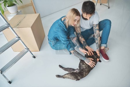 Photo for High angle view of young couple playing with french bulldog in new house - Royalty Free Image