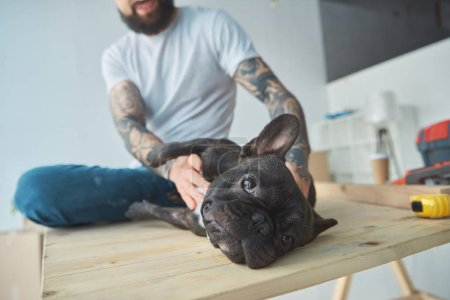 partial view of tattooed man playing with french bulldog on wooden surface in new apartment