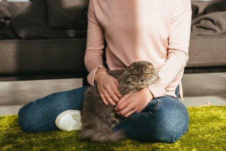 Photo pour Vue partielle de l'adorable chat poil long britannique siégeant avec femme sur le plancher à la maison - image libre de droit