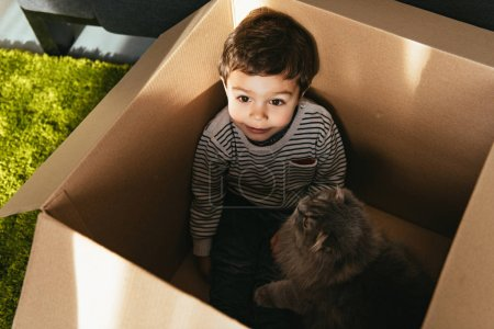 cheerful little boy and british longhair cat in cardboard box at home