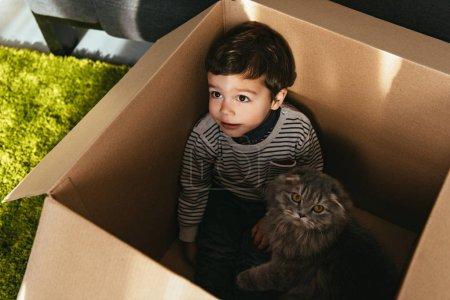 Photo pour Vue grand angle de l'adorable petit garçon et british longhair chat dans une boîte en carton à la maison - image libre de droit