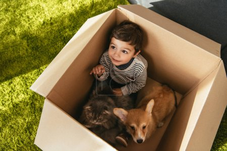 high angle view of smiling little boy with cute corgi and british longhair sitting in cardboard box