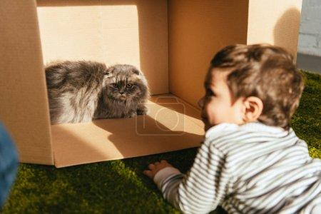Photo pour Mise au point sélective du petit garçon souriant pose près britannique chat poil long dans une boîte en carton à la maison - image libre de droit