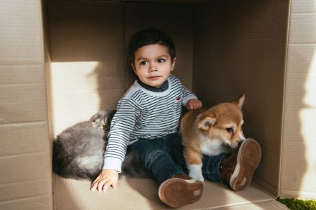 cheerful child with friendly dog and cat sitting in cardboard box