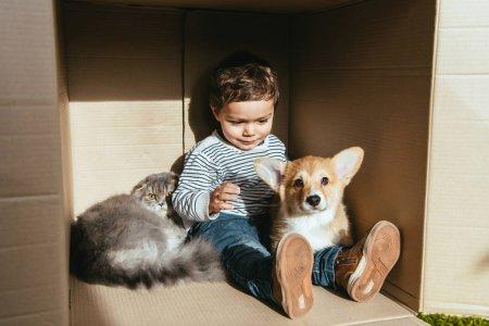Photo pour Petit garçon avec joli chat et chien assis dans une boîte en carton sous le soleil - image libre de droit