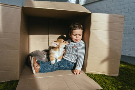 Photo pour Kid avec joli chat et chien assis dans une boîte en carton sous le soleil - image libre de droit