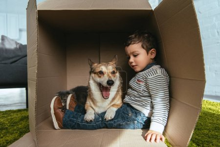 cute welsh corgi pembroke sitting with little boy in cardboard box