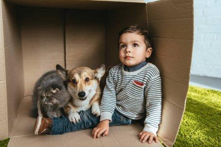 little boy with welsh corgi pembroke and british longhair cat sitting in cardboard box