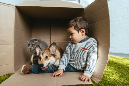 child with adorable corgi and british longhair cat sitting in cardboard box
