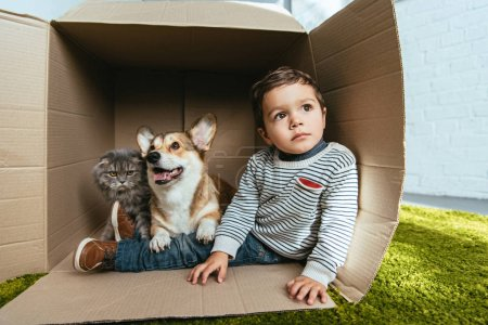 little boy with adorable corgi and british longhair cat sitting in cardboard box