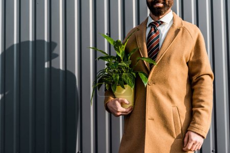 partial view of adult bearded businessman holding green plant in yellow pot