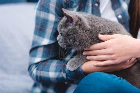 Photo pour Gros plan vue partielle de fille en chemise à carreaux tenant chat gris mignon à la maison - image libre de droit