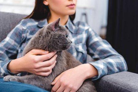 Photo pour Photo recadrée de femme assise sur le canapé et caresser le chat british shorthair - image libre de droit