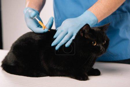 Ausgeschnittene Ansicht des Tierarztes Mikrochipping schwarze Katze in Latex-Handschuhe auf grauem Hintergrund